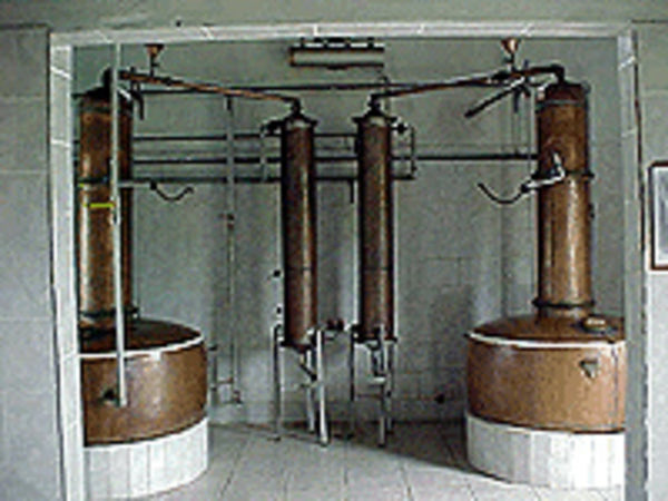 "The Fazenda Vaccaro uses two copper stills with a capacity of 400 litres each. The heating occurs through vapour, circulating in a metal tube in the still. This system results in a higher quality of the product, thanks to the equal heating of the ""vinho"". This way we avoid burning of the liquid at the bottom, a result of direct fire. The boiler also accelerates the process. Temperature control in the still is done through metres regulating the vapour outlet. A more efficient distilling also reduces the acidity and the grade of copper in the cachaça."